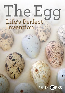 The Egg: Life's Perfect Invention